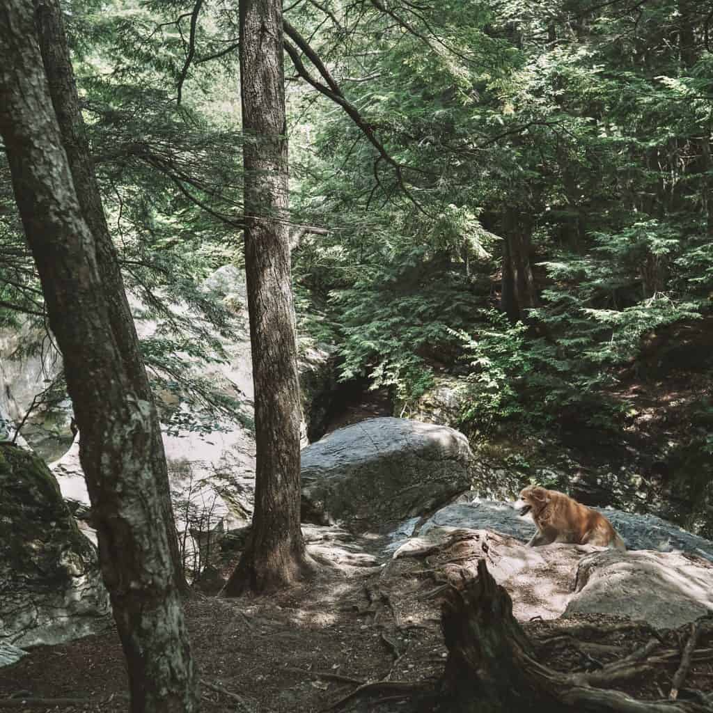 Bingham falls trail in Stowe, Vermont. Dog sitting on the rock