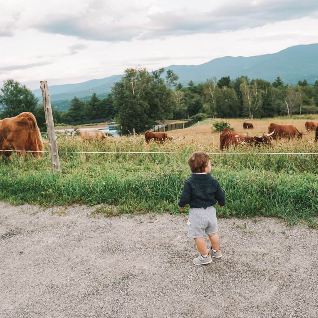 baby checking out cows