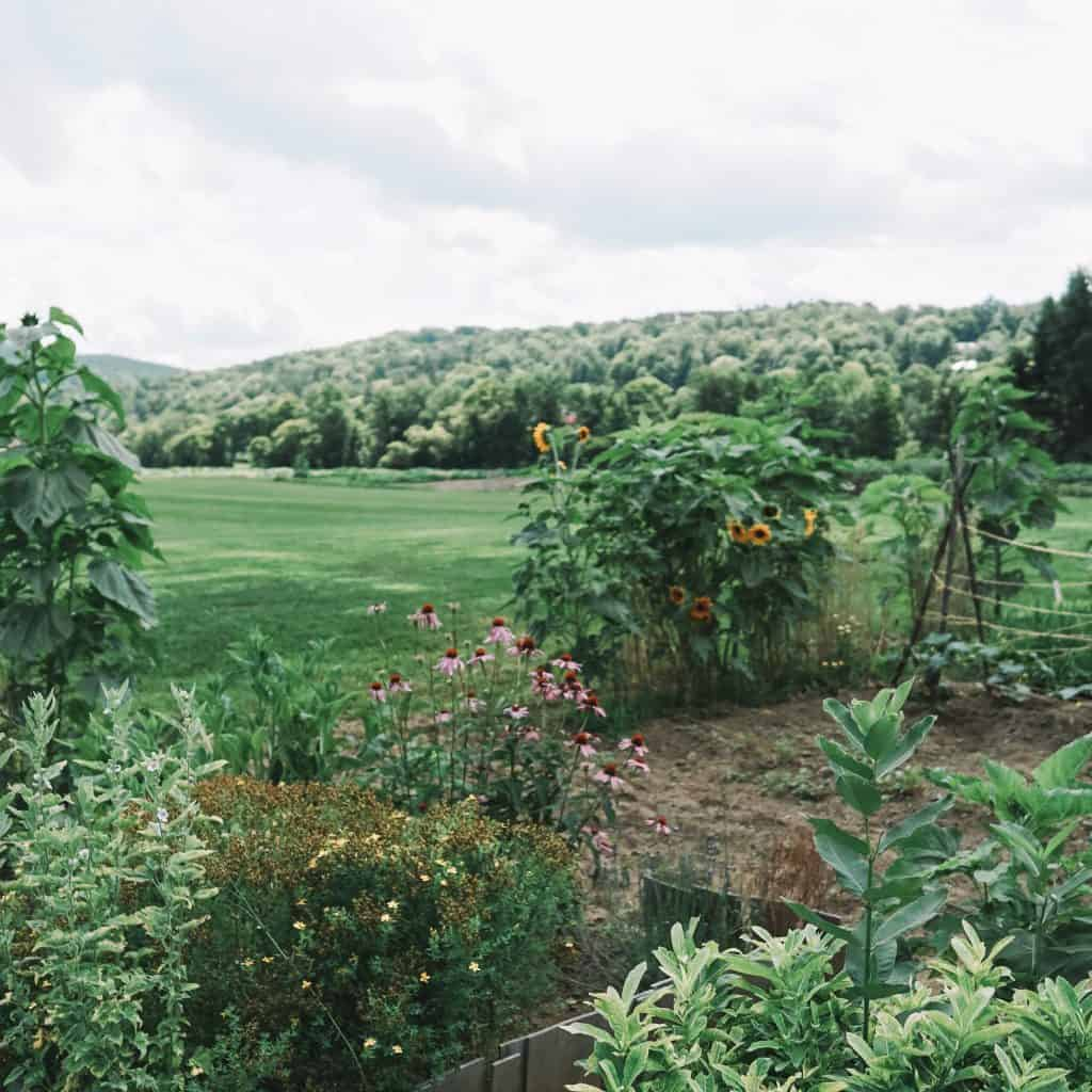Gardens at Billings Farm and Museum. Stowe, Vermont