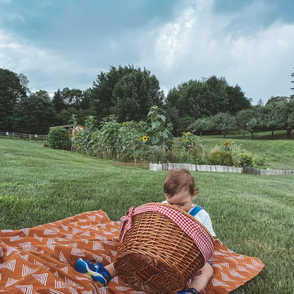 baby boy sitting on a picnic blanket and looking inside the basket