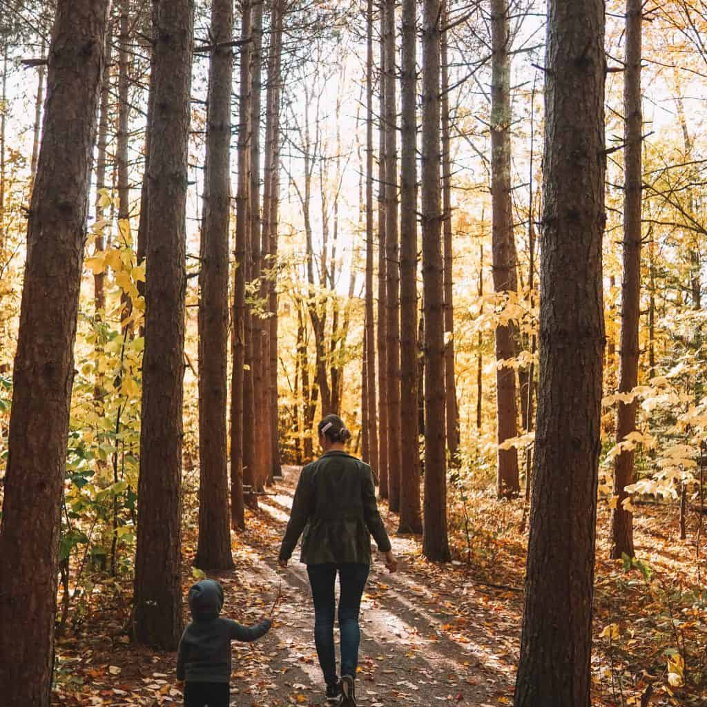 Girl and child walking inside the woods during fall foliage in catskills