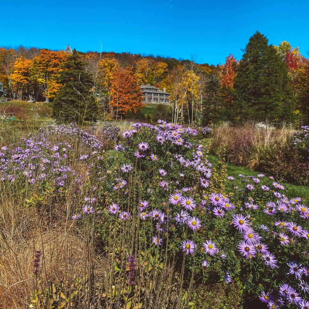 Mountain top arboretum in Catskills capturing flowers and colorful leaves