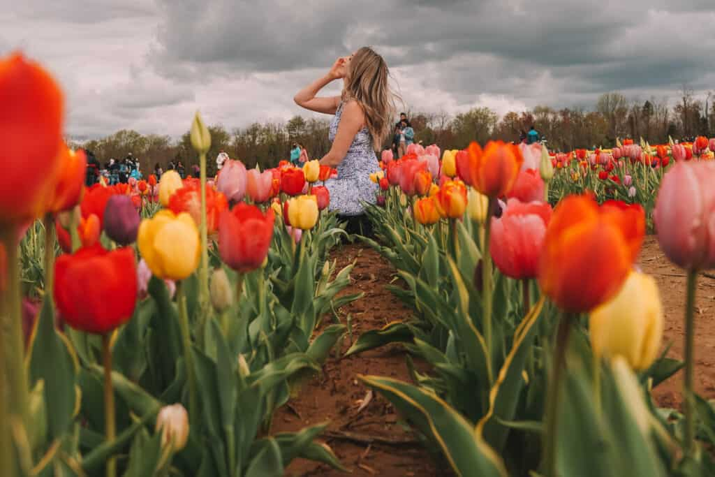 Girl surrounded with colorful tulips at the Holland Ridge Farms