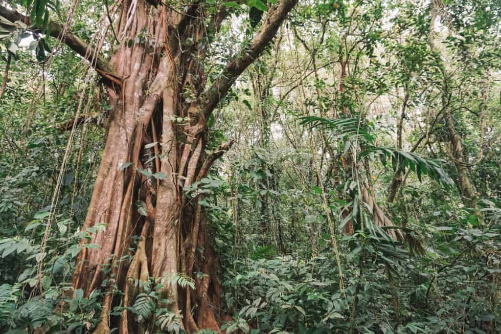 Walk on the hanging bridge in Rainforest;  Arenal, Costa Rica.