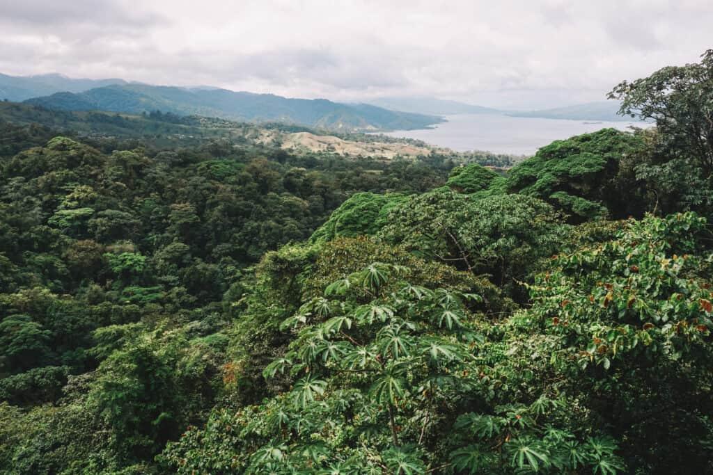 Rainforest landscape in Arenal, Costa Rica.