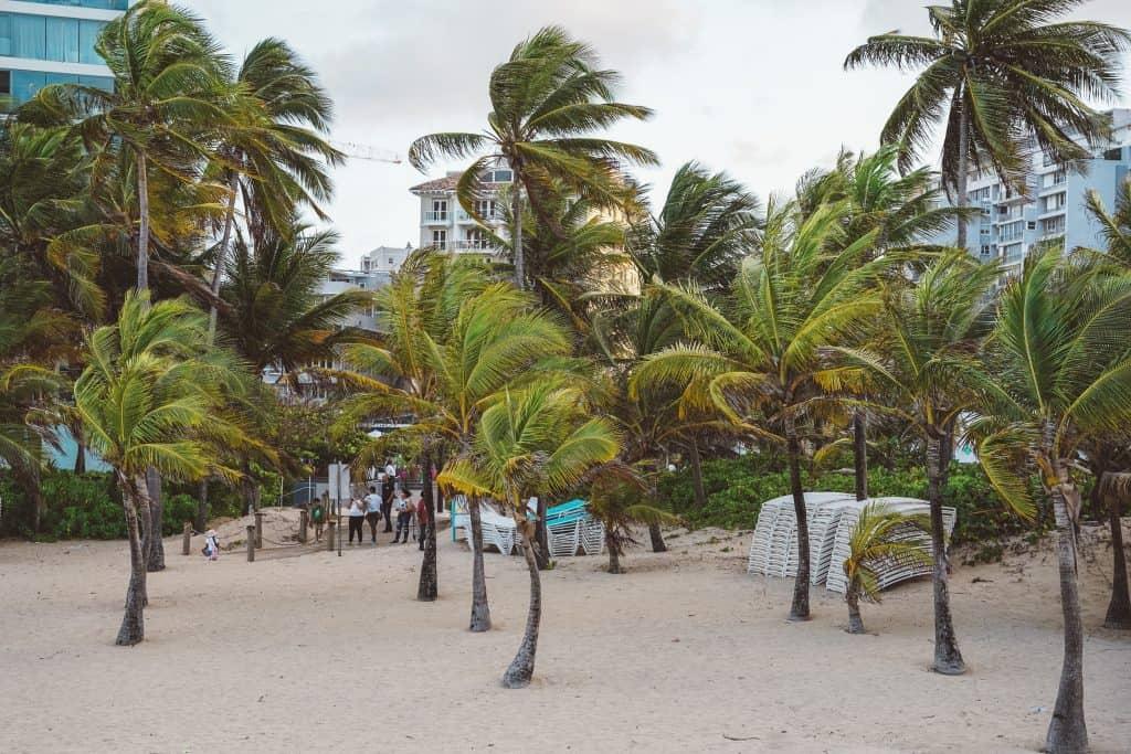 palms at condado beach, puerto rico