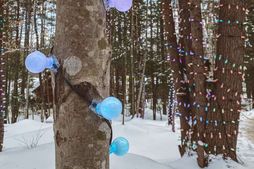 Trees decorated with lights inside the ice castles NH