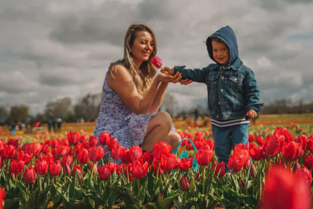 Mom and son at tulips farm. Son is handing mom a tulip and both smiling
