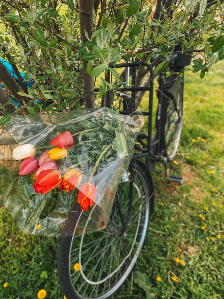 Bicycle and tulips on it